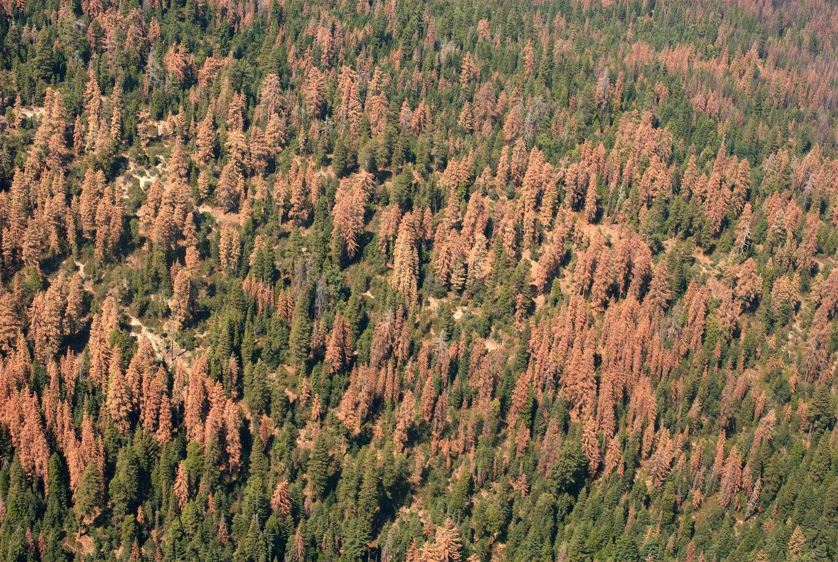 102 million dead trees in California.