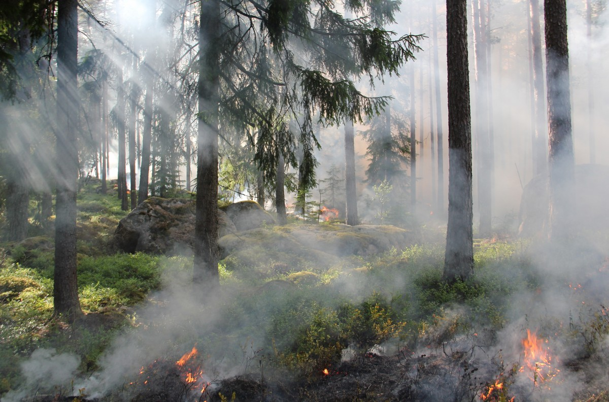 Smoldering flareups of wildfire in a forest.