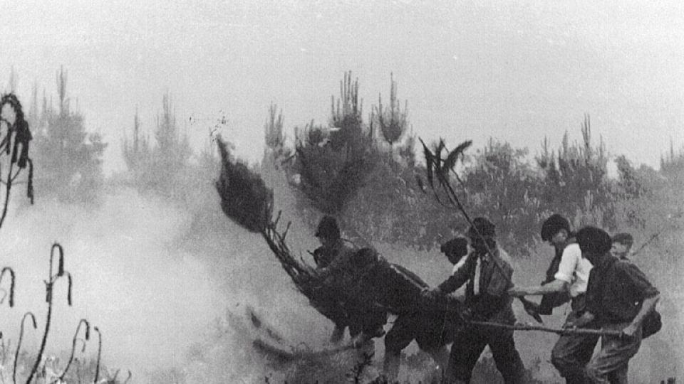 Laymen try to extinguish a wildfire with wet branches in France 1949